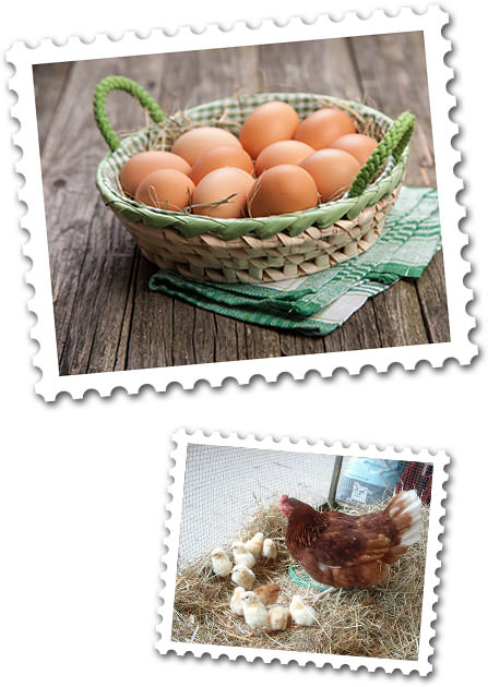 Lang Bio-Hofladen - Hühner