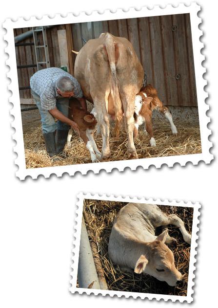 Lang Bio-Hofladen - Rinder